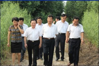 濱州市林業局康局長陪同山東省林業廳李副廳長,山東省林科院院長姜院長在濱州基地考察