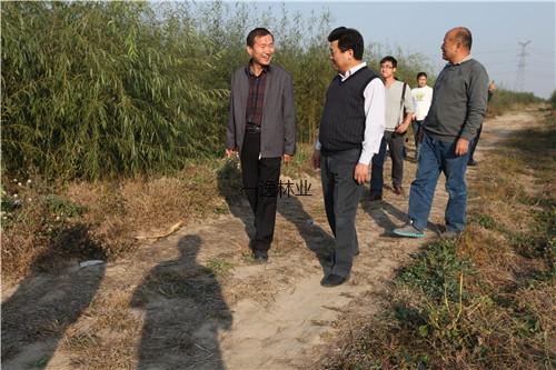 中國鹽堿地研究專家,山東省林科院副院長劉德璽副院長在河北海興農場基地