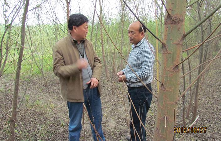 山東省林木種苗協會秘書長閆大成在山東濱州基地