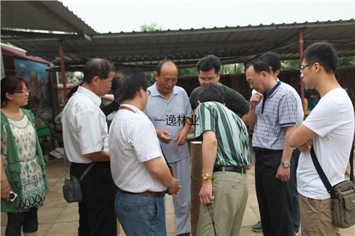 國家林業局科技中心、中國林科院、山東省林科院專家在濱州基地查看渤海柳年輪