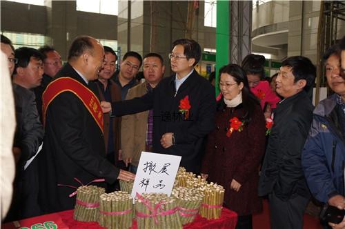 在河北苗木展會上,劉副廳長關注渤海柳生長情況