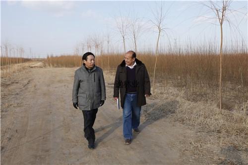 山東省種苗站站長徐金光研究員在河北海興基地考察