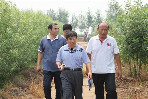 中國亞林所張建峰研究員在濱州基地