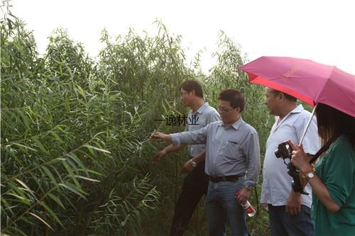 中國林科院林木資源與遺傳育種首席專家在河北海興基地